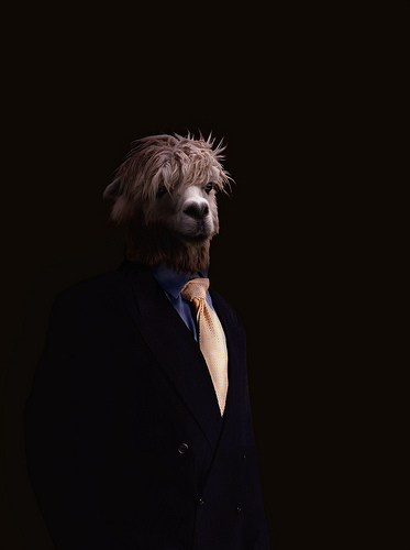 Llama Boss